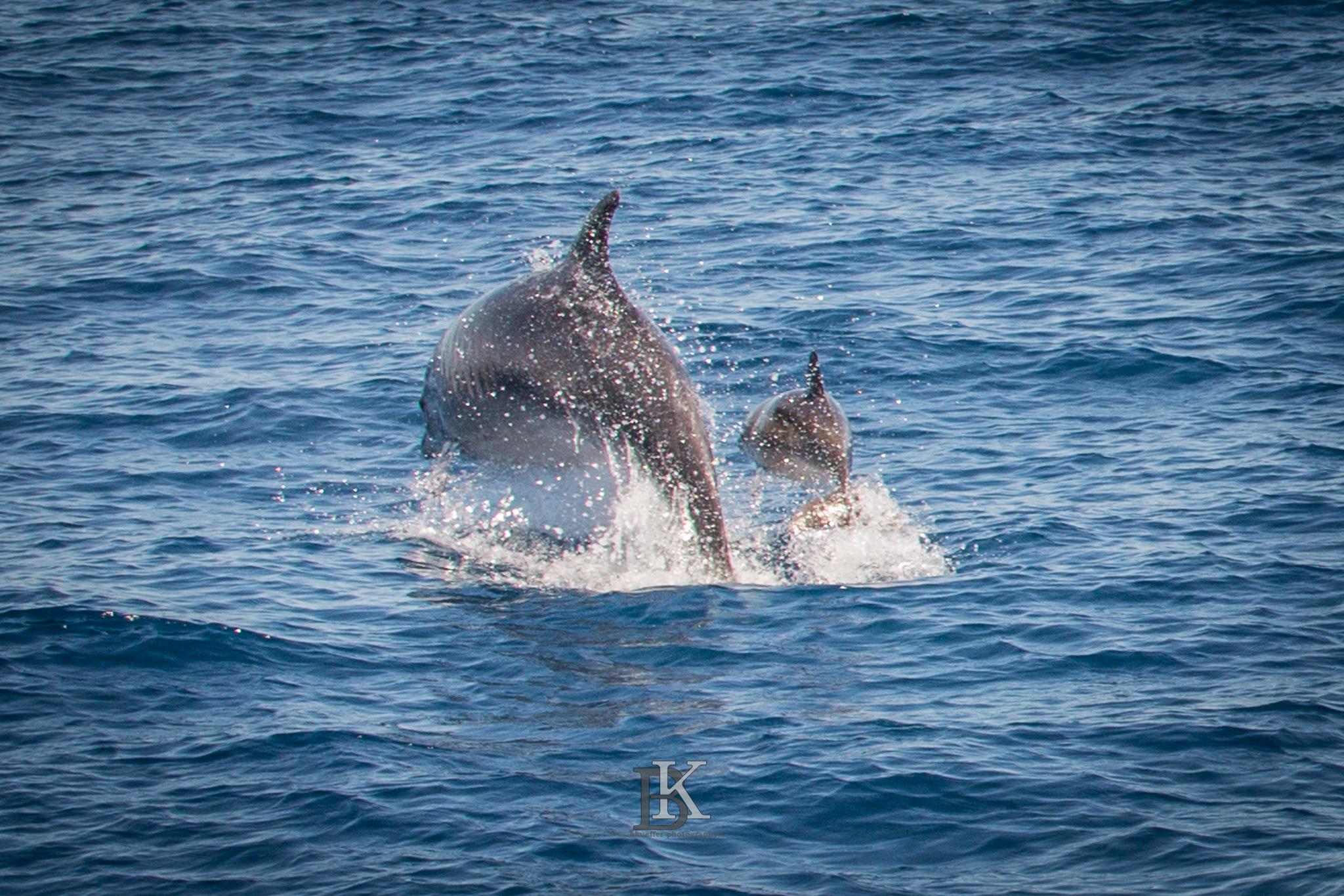 Delfine (8 von 11)
