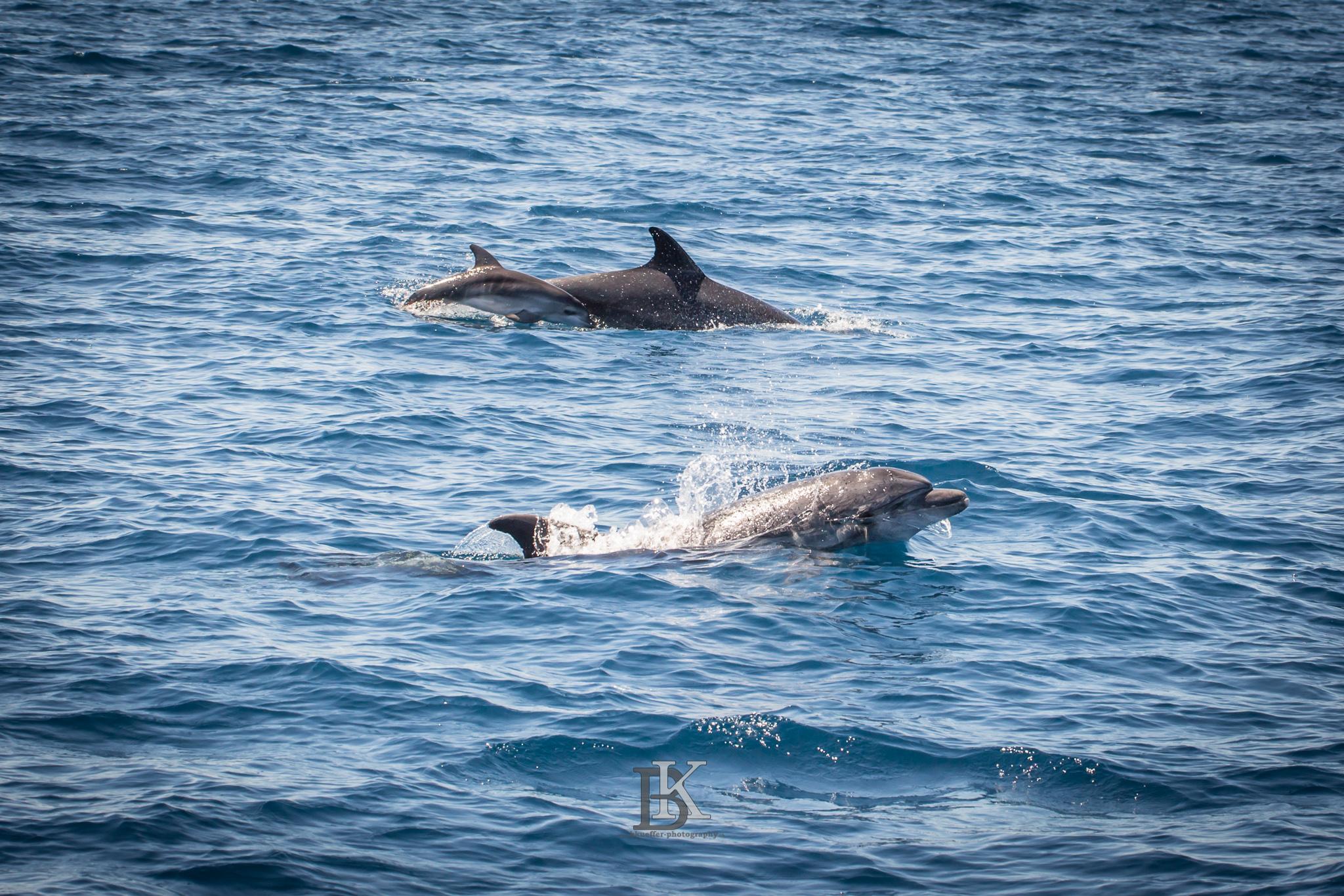 Delfine (9 von 11)
