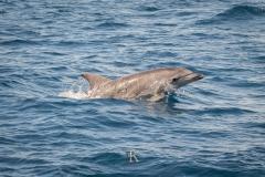 Delfine (1 von 11)