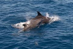 Delfine (3 von 11)