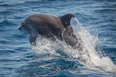 Delfine (4 von 11)