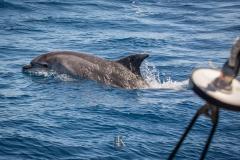 Delfine (5 von 11)