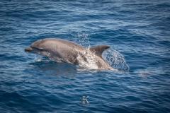Delfine (6 von 11)
