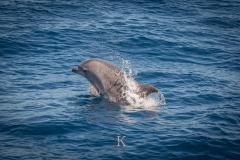 Delfine (7 von 11)